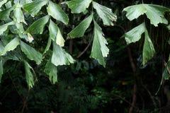 Тропическая верхняя часть переднего плана листьев составляет Стоковая Фотография RF