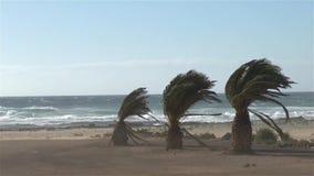 Тропическая гроза шторма волн пальм пляжа акции видеоматериалы
