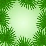 Тропическая зеленая предпосылка с листьями ладони r бесплатная иллюстрация