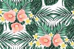 Тропическая картина выходит цветки camelia plumeria иллюстрация вектора