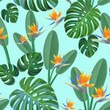 Тропическая картина с цветками райской птицы безшовный вектор текстуры Стоковая Фотография RF