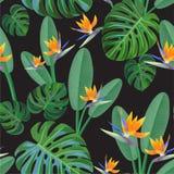 Тропическая картина с цветками райской птицы безшовный вектор текстуры Стоковые Фото
