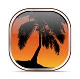 Тропическая кнопка пальмы Стоковая Фотография