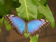Тропическая красочная бабочка Стоковое Изображение