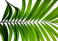 Тропическая ладонь выходит, картина природы конспекта зеленая для искусства стены Стоковое фото RF