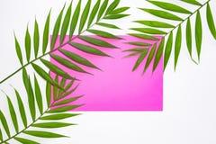 Тропическая ладонь выходит на розовую предпосылку E Квартира кладет с космосом экземпляра Лист зеленого цвета взгляда сверху на б стоковые фото