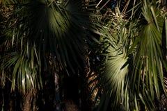 Тропическая ладонь выходит, предпосылка цветочного узора, реальное фото Стоковая Фотография