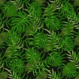 Тропическая ладонь зеленого цвета лета ладони картины выходит черная предпосылка Стоковая Фотография