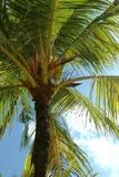 Тропическая ладонь кокоса от нижней стороны стоковое фото