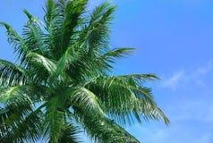 Тропическая ладонь кокоса против неба Стоковые Изображения RF