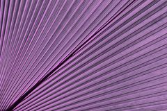 Тропическая ладонь лист Абстрактная естественная текстура картины, экзотическая геометрическая фиолетовая предпосылка Стоковая Фотография RF