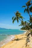 Тропическая ладонь пляжа Стоковые Изображения