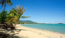 Тропическая ладонь пляжа Стоковое Фото