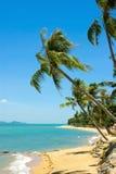 Тропическая ладонь пляжа Стоковая Фотография