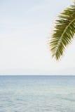 Тропическая открытка лета Стоковые Изображения
