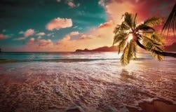 Тропическая пальма в солнечности стоковые фотографии rf