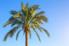 Тропическая пальма Стоковая Фотография RF