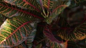 Тропическая предпосылка джунглей листьев Крупный план, сток-видео