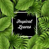 Тропическая предпосылка листьев с заводами джунглей Стоковая Фотография RF