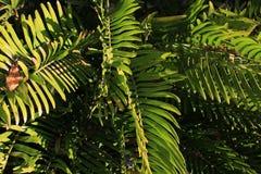 Тропическая предпосылка папоротников текстурирует для графиков стоковые изображения