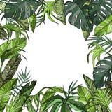 Тропическая предпосылка с ладонью выходит, заводы джунглей Стоковые Изображения