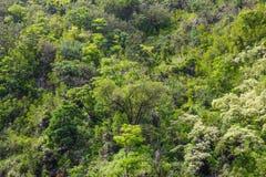 Тропическая предпосылка дождевого леса Стоковая Фотография RF