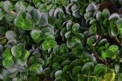 Тропическая предпосылка лист зеленого цвета круга Стоковое Изображение RF