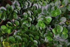 Тропическая предпосылка лист зеленого цвета круга Стоковая Фотография