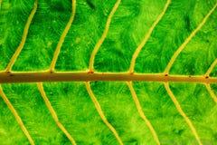 Тропическая предпосылка лист Стоковые Фотографии RF