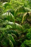 Тропическая природа тропического леса и зеленые fronds ладони Стоковое Фото