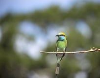 Тропическая птица на ветви Стоковые Фото