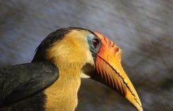 Тропическая птица птицы-носорог стоковая фотография