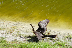 Тропическая птица Стоковое Фото