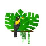 Тропическая птица Toucan сидя на дереве в лесе иллюстрация вектора