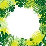 Тропическая рамка вектора листьев установьте текст иллюстрация вектора