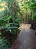 тропическая древесина Стоковые Фотографии RF