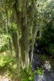 Тропическая установка с испанским мхом Стоковая Фотография