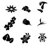 Тропическая чернота комплекта Стоковые Фото