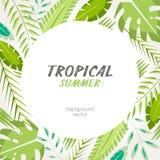 Тропическая экзотическая предпосылка листьев Стоковая Фотография RF