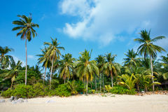 Тропические ладони пляжа и кокоса в Koh Samui, Таиланде Стоковая Фотография RF