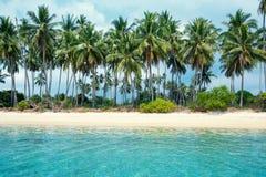 Тропические ладони пляжа и кокоса в Koh Samui, Таиланде Стоковое Изображение RF