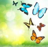 Тропические бабочки в саде Стоковая Фотография