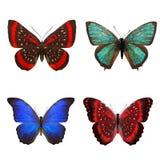 Тропические бабочки изолированные на белизне стоковое фото