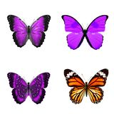 Тропические бабочки изолированные на белизне стоковое фото rf