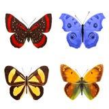 Тропические бабочки изолированные на белизне стоковая фотография