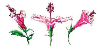 Тропические бутоны цветка гибискуса для wedding продуктов печатания Стоковое Фото