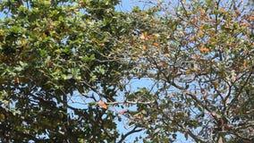 Тропические деревья против голубого неба сток-видео