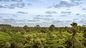 Тропические джунгли в Камбодже Стоковые Фото