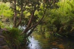 Тропические джунгли Стоковая Фотография RF