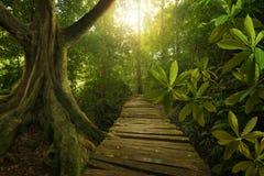 Тропические джунгли Стоковые Изображения